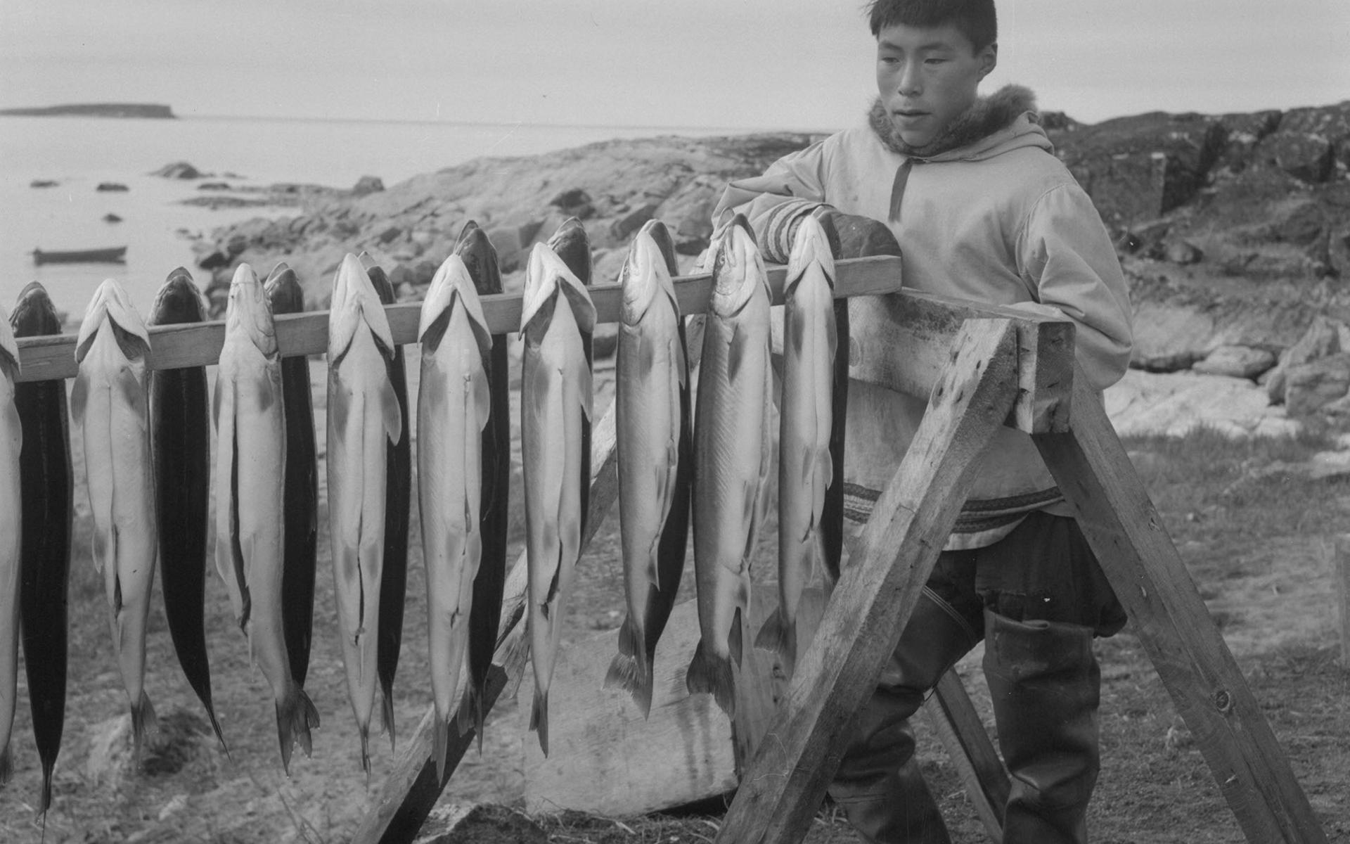 Inuit man standing beside a rack of Arctic char